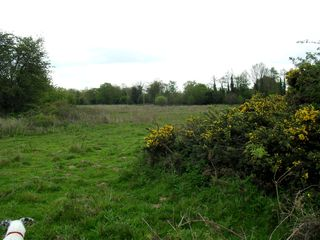 Thwaite Common